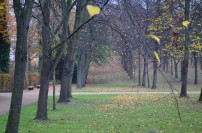 Wooded grounds of Sanssouci Park